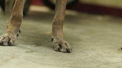 Feet of Small brown puppy Stock Footage
