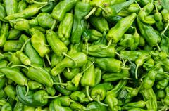 Padron peppers in a bulk display Stock Photos