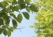 Stock Photo of Foliage of fresh green and blue sky