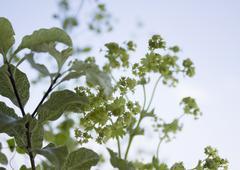 Green flowerets - stock photo