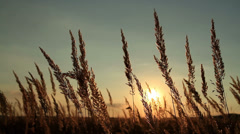 Beautiful grass field at sunset - stock footage