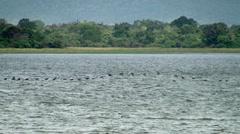 Bird migration (V-formation) at Sri Lanka. Stock Footage