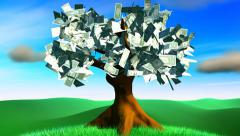 Money tree - stock footage