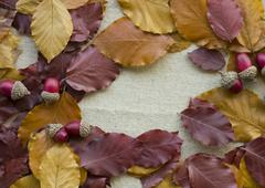 Fallen leaves and acorns Stock Photos