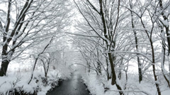 Snow covered trees at river Stock Footage