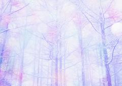 Image of forest, CG Stock Photos