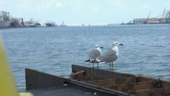 Birds sitting on shore with oil rigs in background Stock Footage