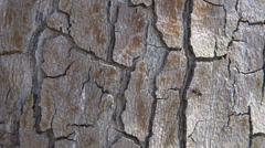 Lonely ant searching its way on tree trunk Stock Footage