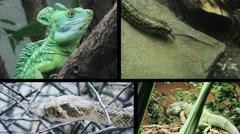 ZOO Serpents split screen Stock Footage