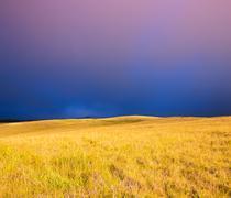 Beautiful sunset over golden field Stock Photos