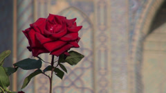 Red rose in front of Registan building, Samarkand, Uzbekistan Stock Footage