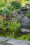 Garden decorated with stones and aquatic plants - stock photo