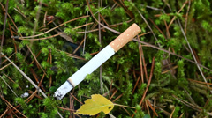 Burning cigarette fire hazard on forest moss episode 1 Stock Footage
