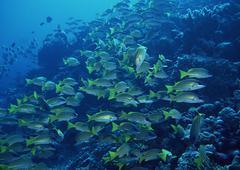 School of Fish - stock photo