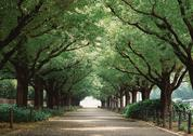 Stock Photo of Avenue