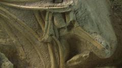 Mammoth bones in Waco Stock Footage
