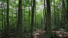 Tracking shot in a thick deciduous forest Stock Footage