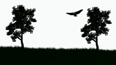 Bald Eagle soars between trees Stock Footage