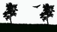 Stock Video Footage of Bald Eagle soars between trees