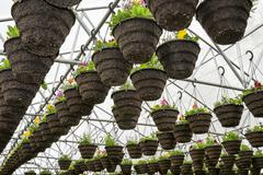 pots of annuals hanging in greenhouse - stock photo