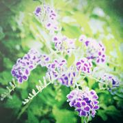 purple flower in the garden with retro filter effect - stock photo
