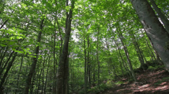 Low angle tracking shot in a thick deciduous forest Stock Footage