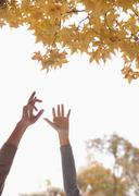 Young Couple Reaching for Gingko Leaves Stock Photos