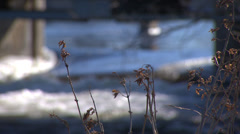 Brush Near Rushing River With Bridge in Winter HD Video Stock Footage