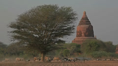 Ancient stupa in Old Bagan Stock Footage
