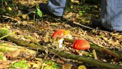 Woman passes away at fly agaric mushrooms Stock Footage
