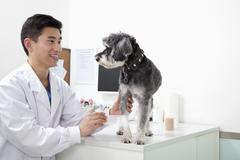 Dog in veterinarian's office Stock Photos