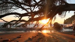 sea sunset tree - stock footage