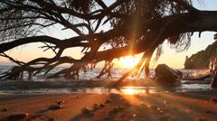 Sea sunset tree Stock Footage
