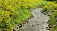 Yellow wild flowers grow by rocky river Stock Footage