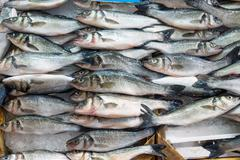 Fresh fish offer for sale Stock Photos