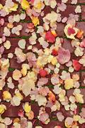 Path fall background Stock Photos