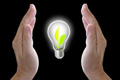 plant grown in the light bulb and protect by hand - stock photo