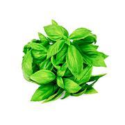 Basil green bundle Stock Photos