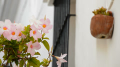 Flowers in a typical andalusian village street - stock footage