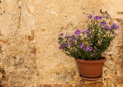 Tuscan flowers Stock Photos