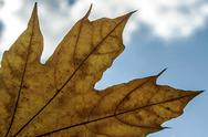 Stock Photo of autumn leaf on sky