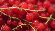 Stock Video Footage of Rotating Red Currants (loopable)