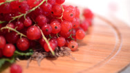 Stock Video Footage of Rotating Red Currants