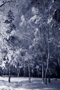 winter night landscape - stock photo