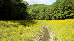Mountain rocky river yellow wild flower valley Stock Footage