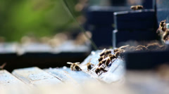 Bees in the hive - stock footage