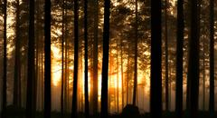 Sunset in foggy forest Stock Photos