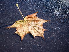 fallen leaf on the wet sidewalk - stock photo
