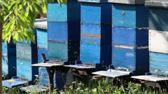 Bees in the hives Stock Footage