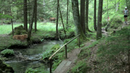 Stock Video Footage of Competitors running through woods